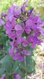 Wildflowers en mi patio trasero Fotografía de archivo