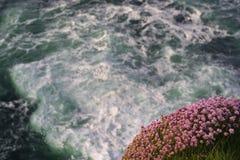 Wildflowers en Oceaan Stock Foto's