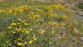 Wildflowers en papavers op de berghelling stock footage