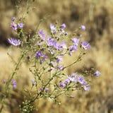 Wildflowers en parque nacional. Imágenes de archivo libres de regalías