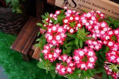 Wildflowers en pote de madera Imagen de archivo libre de regalías