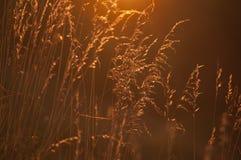 Wildflowers en prado durante puesta del sol Imagen de archivo