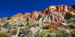 Wildflowers en Rocky Cliffs van Utah Royalty-vrije Stock Fotografie