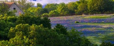 Wildflowers en Sugar Ridge Road fotos de archivo libres de regalías