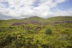 Wildflowers en un fondo de montañas Fotos de archivo libres de regalías