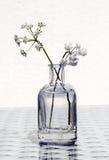 Wildflowers en un tarro de cristal Fotos de archivo libres de regalías