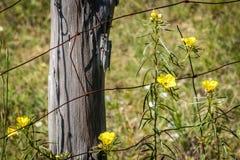 Wildflowers en una cerca Post Imagen de archivo