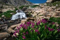 Wildflowers en watervallen Royalty-vrije Stock Foto