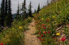 Wildflowers entlang der Spur lizenzfreie stockfotografie