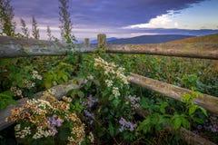 Wildflowers et barrière Along la traînée appalachienne photographie stock libre de droits
