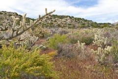 Wildflowers et cactus de désert en fleur. Photographie stock libre de droits