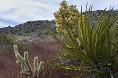 Wildflowers et cactus de désert en fleur. Images stock