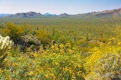 Wildflowers et cactus de parc national de Saguaro de l'Arizona image stock
