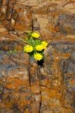 Wildflowers et lichen Photo libre de droits