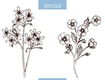 Wildflowers exhaustos de la mano monocromática del vector en el fondo blanco libre illustration