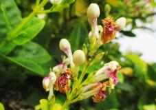 Wildflowers fanés images stock