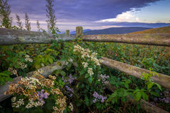 Wildflowers and Fence Along the Appalachian Trail Royalty Free Stock Photography