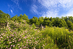 Wildflowers at Fence on Blue Ridge Parkway North Carolina Stock Photos