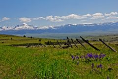 Wildflowers, Fencing, Valley and Mountains Stock Photos
