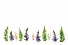 Wildflowers And Fern Leaves Arrangment On White Background. Purple wildflowers and fern leaves arrangment on white background Stock Photo