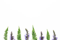 Wildflowers And Fern Leaves Arrangment On White Background. Purple meadow flowers and fern leaves in a row on white background Royalty Free Stock Photo