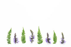 Wildflowers And Fern Leaves Arrangment On White Background. Purple meadow flowers and fern leaves in a row on white background Royalty Free Stock Image