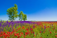 Wildflowers field. With trees and clear blue sky in the background stock photos