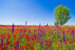 Wildflowers field. With trees and clear blue sky in the background royalty free stock images