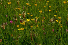 Wildflowers in a field, selective focus Stock Image