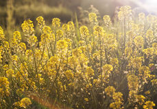 Wildflowers in the field with sunlight Stock Image