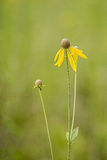 Wildflowers in a field. On a sunny day Royalty Free Stock Photography