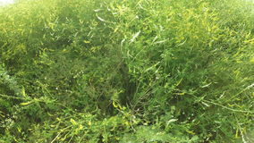 Wildflowers in field stock video footage