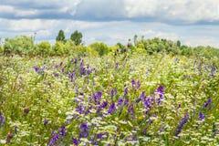 Wildflowers. Royalty Free Stock Photos
