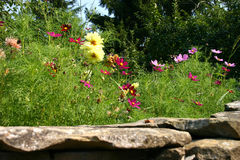 Wildflowers fields. Summer wildflowers fields and stones royalty free stock photo