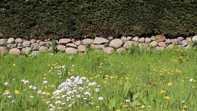 Wildflowers florecientes del flor con las paredes de piedra y las cercas del árbol almacen de metraje de vídeo