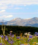 Wildflowers fous Image stock