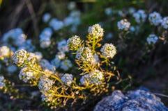 Wildflowers frais source ou conception d'été Photo stock