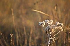 Wildflowers frescos mola ou projeto do verão Fotografia de Stock Royalty Free