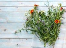 Wildflowers frisch von einem Feld, copyspace, topview lizenzfreie stockfotos
