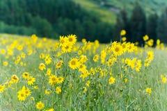 Wildflowers Royalty Free Stock Photo