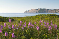 Wildflowers in Gaspe Royalty Free Stock Images
