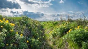 Wildflowers gialli a fondo del cielo nuvoloso blu Immagine Stock Libera da Diritti