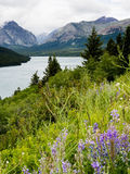 Wildflowers in Glacier national park Stock Photo