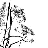 Wildflowers graphic. Black ink. Royalty Free Stock Photos
