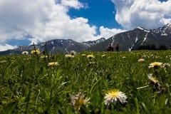 Wildflowers, gras, klimmers royalty-vrije stock fotografie
