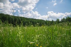 Wildflowers and grass royalty free stock photography