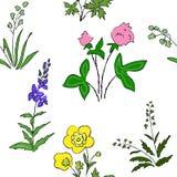 Wildflowers and grass seamless texture Stock Photos
