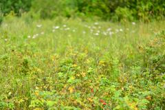 Wildflowers and grasses in yellow-green colors stock image