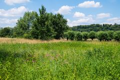 Wildflowers in the green countryside near River Ruhr, Essen, Germany. Meadow and trees near River Ruhr, Essen, North Rhine-Westphalia, Germany royalty free stock photos