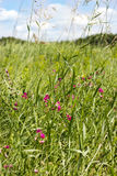 Wildflowers on a green field. Summer weather Stock Photo